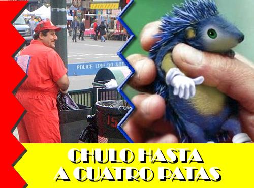 1-chulo